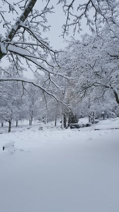 Winter Love, Winter Snow, Winter Christmas, Winter Walk, Snowy Day, Snowy Weather, Snow Pictures, Winter Magic, Winter Scenery