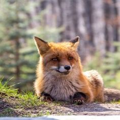 10 Dinge, die du im März in Wien machen musst | 1000things.at Fox, Animals, Ghosts, Do Your Thing, City, Animales, Animaux, Animal, Animais