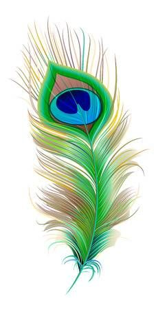 Illustration of Peacock feather. Isolated on white vector illustration vector art, clipart and stock vectors. Peacock Wall Art, Peacock Feather Tattoo, Feather Drawing, Feather Vector, Peacock Painting, Feather Art, Feather Tattoos, Fabric Painting, Bird Feathers
