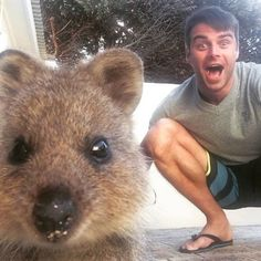 Quokka Selfies Are By Far The Cutest Trend In Australia Right Now Happy Animals, Cute Funny Animals, Funny Animal Pictures, Animal Pics, Quokka Animal, Selfies, Extreme Close Up, Cute Creatures, Make You Smile