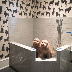 They couldn't wait for the glass to be installed! Dog Shower by Amy Vermillion Interiors LLC