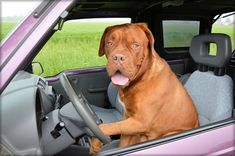Dogs In Hot Cars: How Long Is Too Long For A Dog?