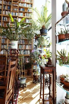 Plants & books/ photo Ivan Tereschenko