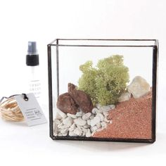 Kit #4 - Glass Brass Box Terrarium