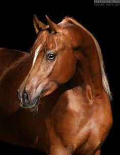 ☀ Equine Photography by Ekaterina Druz