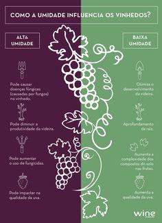 O que acontece no vinhedo reflete no vinho. Entenda mais sobre o assunto com a gente! #vinho #wine #vinhedo