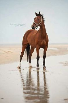 <3 Keep Clam and Ride Horses