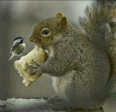 If Chickadees like Squirrels and share with them, maybe we should too!