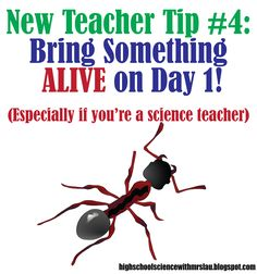 New Teacher Tip #4: Bring Something Alive on Day 1.    High School Science with Mrs. Lau's Blog: Excite your students about learning from day 1!