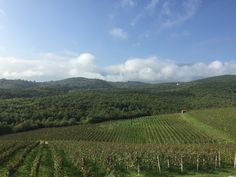 Northern Greece's Naoussa Wine Road is HOT | spaswinefood