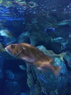 The Aquarium of the Pacific in Long Beach, CA is a wonderful place to visit, filled with educational opportunities and fun activities for the whole family. Pose For The Camera, Long Beach, Wonderful Places, Fun Activities, Aquarium, California, Poses, Animals, Goldfish Bowl