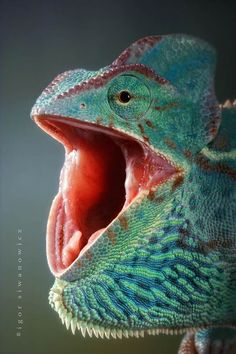 Hungry iguana - http://www.ufunk.net/en/photos/insectes-reptiles-macro-photographie/