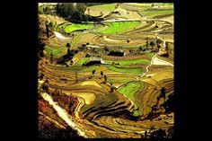 Terrazas de Damphus Himalaya, Nepal:..*•#~~$??*