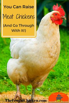 How we raise a year's worth of chicken. Breed suggestions, dealing with emotions, and more. You CAN do this!