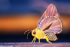 I made a new poly wallpaper of this insect what do you guys think? :-)