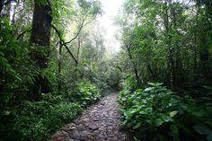 Hiking up Gunung Gede by Nir Nussbaum, via Flickr