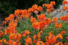 Low Water Garden Designs | ... garden plants to create the feeling of warmth in Tuscan gardens