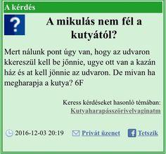 Hungary, Funny Things, I Laughed, Funny Jokes, Haha, Comedy, Random, Memes, Google