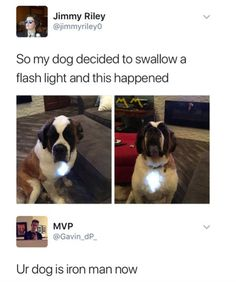30 Funny Animal Pictures