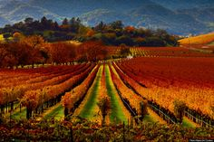 The annual Napa Bike Wine Tour might be the coolest autumn activity on the West Coast. Riders spend a weekend cycling through vineyards of o...