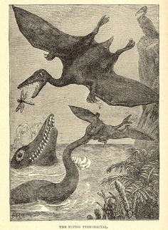 The Flying Pterodactal  From Sea and Land by J.W. Buel. 1889