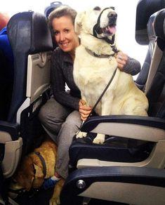 viajar con perro dentro avion