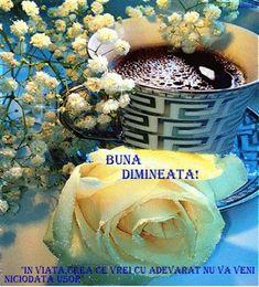 Good Morning, Plant, Buen Dia, Bonjour, Good Morning Wishes