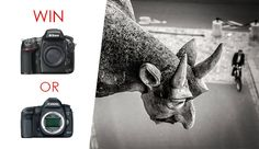 Win a Canon 5D MK III or Nikon D800 in This Free Photo Contest! #photography