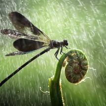 Raining.....