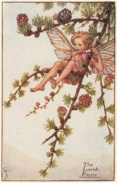 FLOWER FAIRIES/BOTANICALS: The Larch Fairy; This is an original vintage Cicely Mary Barker Flower fairies colour print. It is not a modern reproduction, c1935; approximate size 11.0 x 7.0cm, 4.25 x 2.75 inches