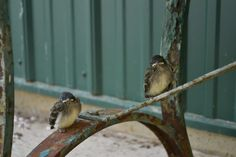 Our Neck of the Woods: Cute Baby Birds!