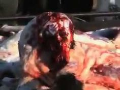 Dog abuse in China - YES WE CAN, WE CAN SAVE THEM!...damn shame