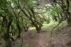 #Walking through the laurel #forests #LaGomera
