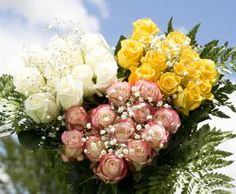 12 Dozen Your Choice Color Elegant Roses Long 144 & Fillers