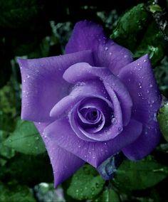 Blossom Garden, Blossom Flower, Flower Crafts, Flower Art, Art Flowers, Beautiful Rose Flowers, Beautiful Gardens, Colorful Garden, Colorful Flowers