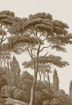 Pins et cyprès sépia (papier peint panoramique) - Ananbô