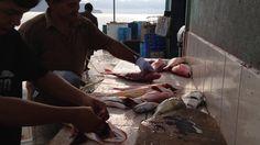 El Muelle de Tambor (Bahía Ballena, Golfo de Nicoya. Costa Rica) es una pequeña comunidad de pescadores de aproximadamente 40 unidades familiares (hogares) en la cual una veintena de unidades de pesca (pagas) dinamizan la actividad económica local.  La dinámica pesquera local está compuesta por dos periodos de pesca bien diferenciados.  Uno que abarca 9 meses al año y al que dedican sus esfuerzos  de captura al Pargo, Cabrilla y Corvina.