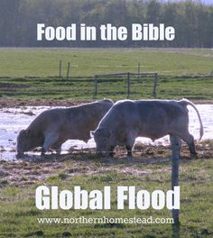 A thoughtless approach to meat consumption is not biblical, nor is…