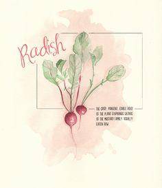 Experiment #12 Radish in watercolor by Annemarie Gorissen