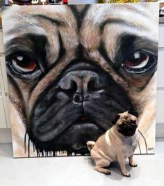 It's a pugs life. Animals And Pets, Cute Animals, Pugs And Kisses, Pug Art, Pug Pictures, Cute Pugs, Pug Love, Pet Portraits, Dog Life