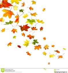 Photo about Maple autumn falling leaves, isolated on white background. Image of ideas, freefall, october - 32546086 Fall Leaves Drawing, Fall Leaves Tattoo, Autumn Tattoo, Leaf Drawing, Autumn Leaves, Maple Leaves, Autumn Art, Autumn Theme, Fall Drawings