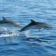 Rencontrer des baleines et des dauphins Nice 06 - Sport Découverte  - http://www.sport-decouverte.com/