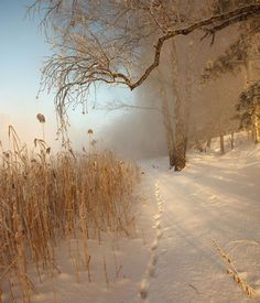 Find images and videos about white, winter and snow on We Heart It - the app to get lost in what you love. Winter Szenen, Winter Love, Winter Magic, Winter Light, Winter Season, Winter's Tale, Snowy Day, Snow Scenes, Winter Pictures