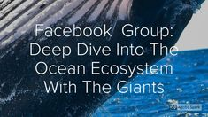 Deep Dive Into The Ocean Ecosystem With The Giants Ocean Ecosystem, Learning Tools, Whales, Poet, Climate Change, Diving, Meditation, Author, This Or That Questions