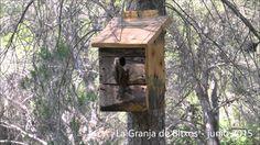 Bird Feeders, Outdoor Decor, House, Home Decor, Nesting Boxes, Birds, Spring, Homemade Home Decor, Haus