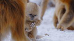 Funny Dog And Monkey Animals Giff #9371 - Funny Monkey Giffs| Funny Giffs| Monkey Giffs