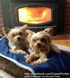 "Yorkies you're doing well..From your friends at phoenix dog in home dog training""k9katelynn"" see more about Scottsdale dog training at k9katelynn.com! Pinterest with over 21,400 followers! Google plus with over 345,000 views! You tube with over 500 videos and 60,000 views!! LinkedIn over 10,600 associates! Proudly Serving the valley for 12 plus years! now on instant gram! K9katelynn"