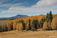 Fall Colored Aspens on Hart Prairie by Jeff Goulden Flagstaff Arizona, Arizona Usa, Fine Art Photography, Landscape Photography, Nature Photography, Beautiful World, Beautiful Images, 5 Image, National Forest