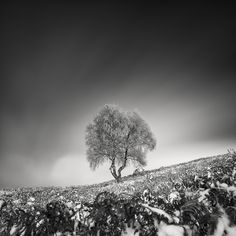 The First Snow Of 2016 by Pierre Pellegrini, Photography, Medium format film Birch Forest, Tree Forest, Medium Format Photography, Phase One, First Snow, Film, Nature, Artist, Plants