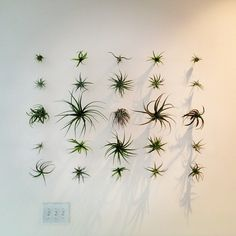 incorporating some type of plants. maybe along the wall near the new stairs? Plant Wall, Plant Decor, Air Plants, Indoor Plants, Architectural Plants, Air Plant Display, Plant Projects, Office Plants, Types Of Plants